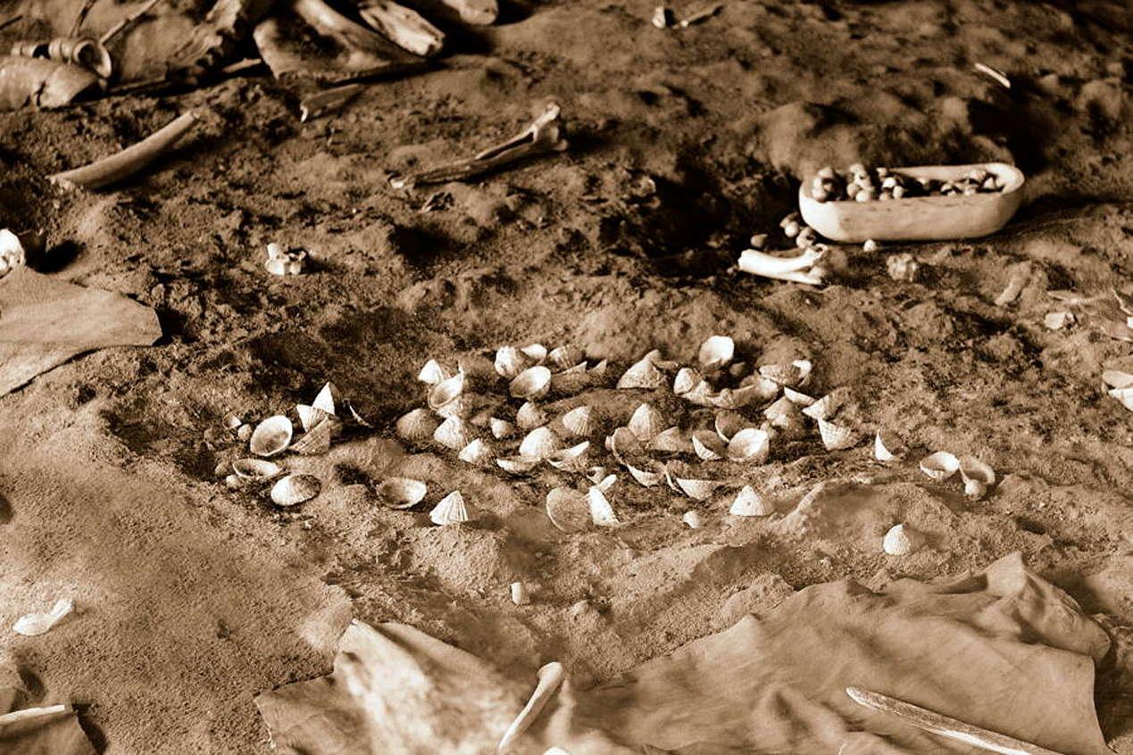 Restos de conchas de moluscos encontrados en las cuevas de Altamira.