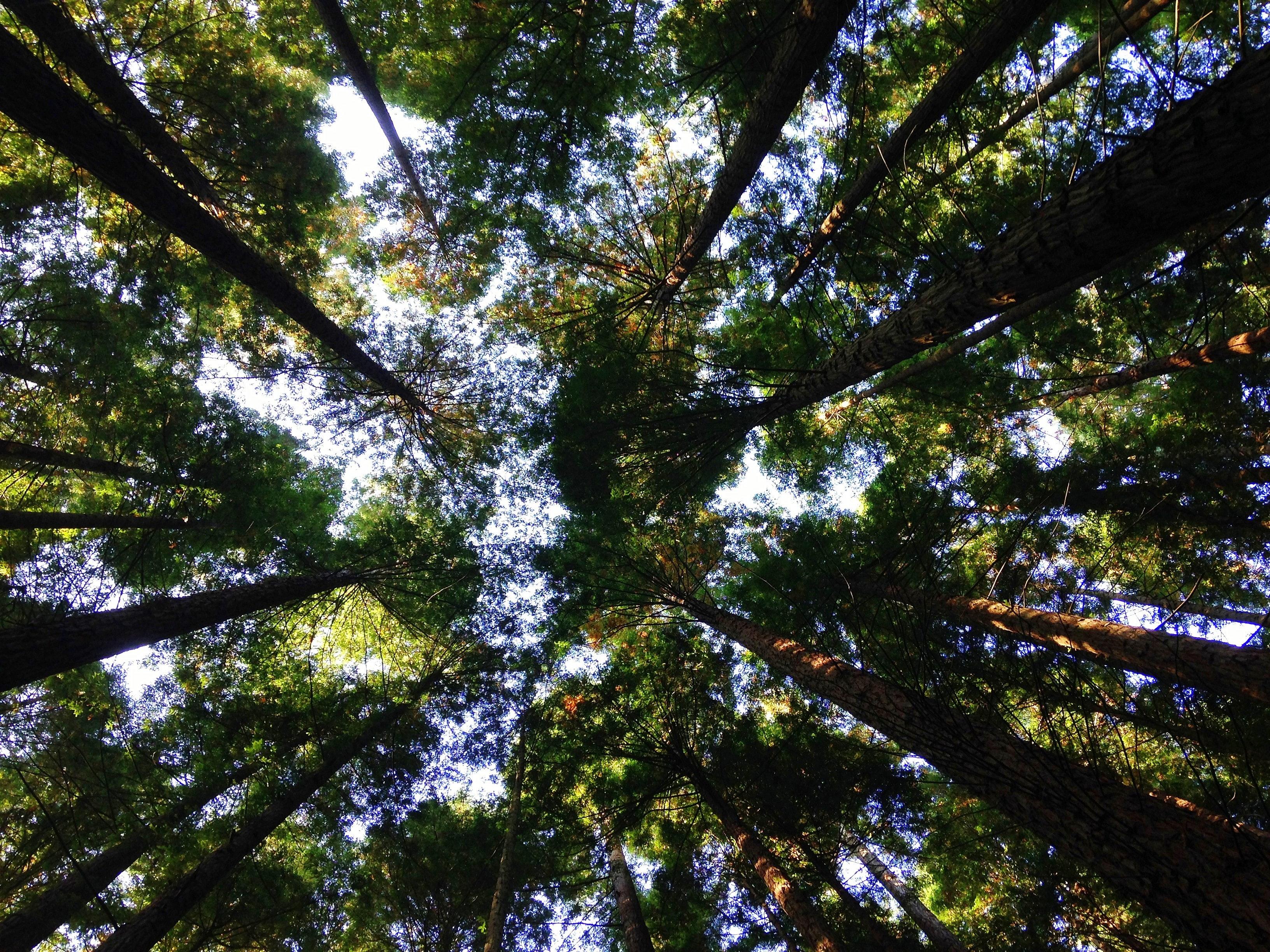 bosque desde el punto de vista de alguien que mira hacia el cielo