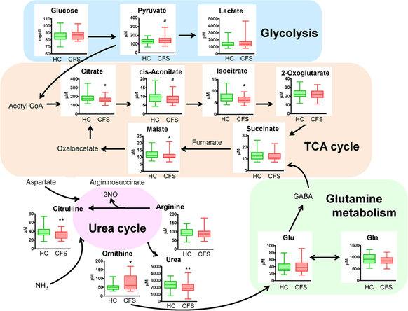 Vías metabólicas celulares que determinan el SFC
